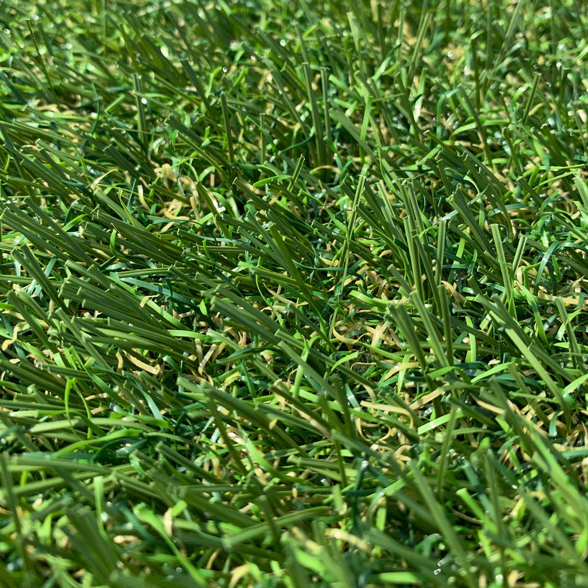 Thistle Artificial Grass: Cragievar (35mm)